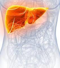 Active liver - wat is - gebruiksaanwijzing - recensies - bijwerkingen