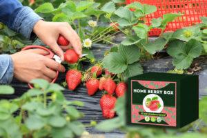 Home Berry Box - bestellen - kopen - in etos - prijs